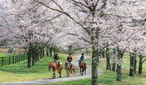 紗栄子の那須の牧場